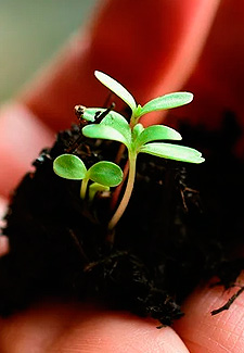 Fertilizantes y Nutrición