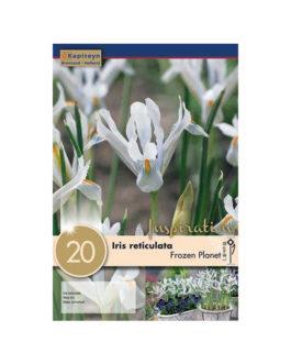 Bolsa Iris reticulata  Frozen Planet